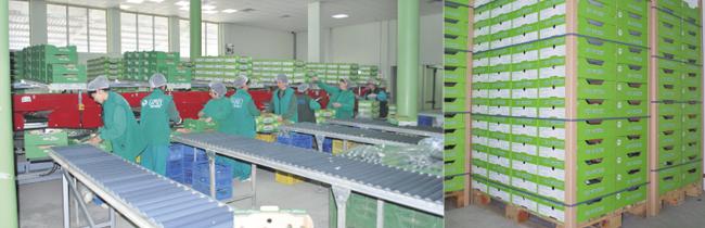 Бързината – основно предизвикателство при доставката на биопродукти